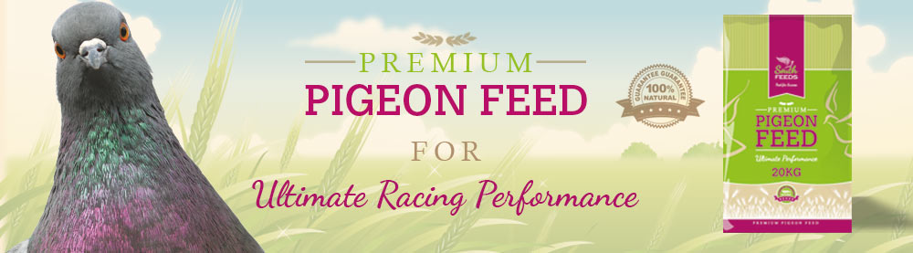 Superior Pigeon Feed Suppliers